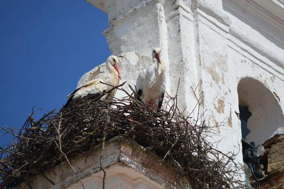 El Madroño cigüeñas en la torre